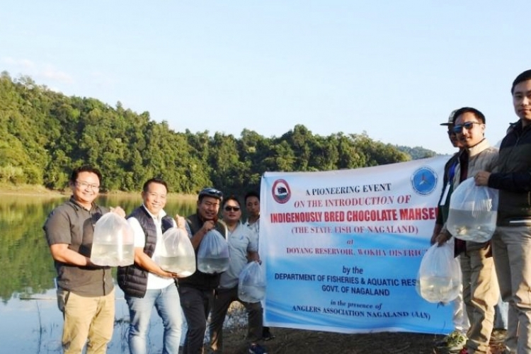 Nagaland makes record with State fish