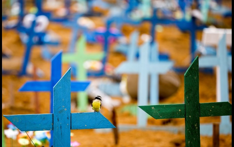 A bird is pictured over a cross during a mass burial of people who passed away due to the coronavirus disease (COVID-19), at the Parque Taruma cemetery in Manaus, Brazil. REUTERS Photo