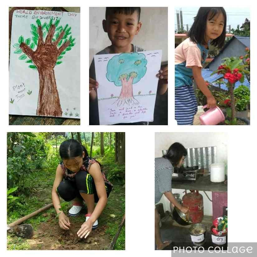 Mount Saramati School students and staff observed World Environment Day under the theme 'Biodiversity' with activities like watering plants, planting saplings, cleaning surroundings, managing wastes etc which were carried out in their homes.