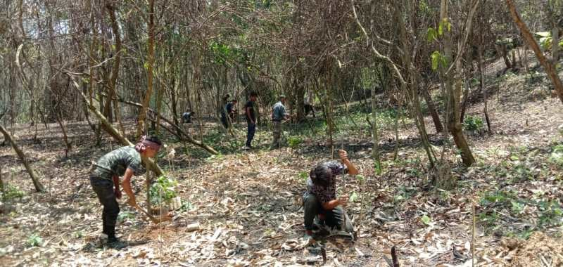 Farmers under PMKSY batch-3 engaged in coffee plantation in Sutemi village, Zunheboto.
