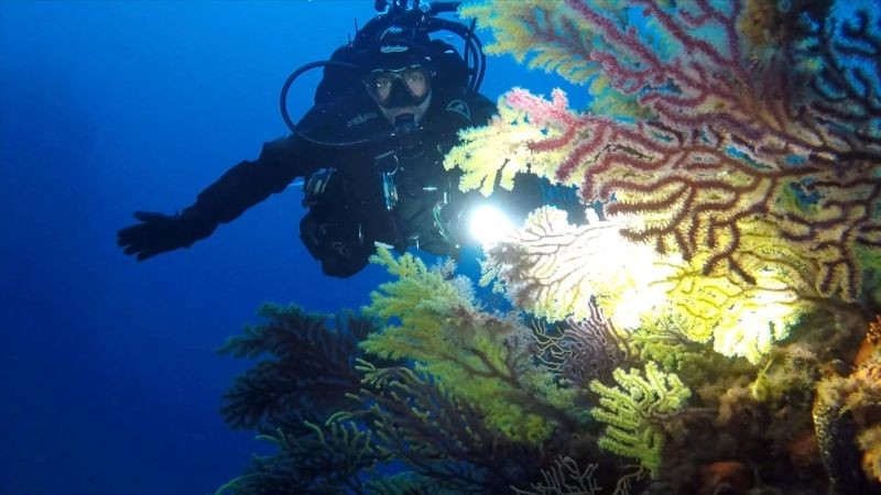 An Italian Coast Guard diver shines a torchlight on a forest of gorgonians (sea fans) and coral at the Secche di Tor Paterno, a protected marine reserve 5 miles off the coast of Rome during a study on the health of Italy's seas and improvements to marine life due to a lack of human activities during the coronavirus disease (COVID-19) lockdown, in this still picture taken from video on April 29, 2020. (REUTERS File Photo)