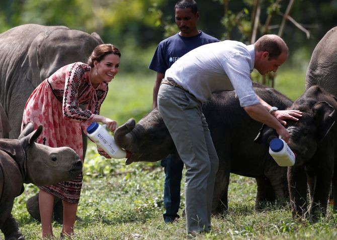 Prince William, Duke of Cambridge, and his wife Catherine help out in feeding baby elephants during their 2016 visit to the Kaziranga National Park in Assam. Photograph: Heathcliff O'Malley/ Getty Images
