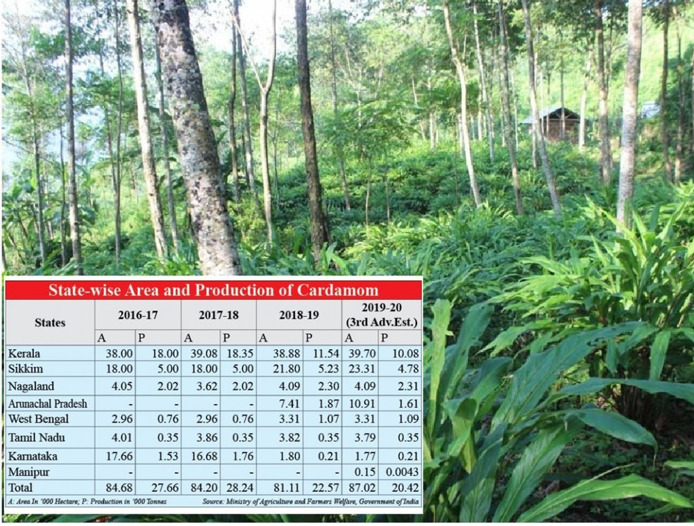 Organic Cultivation of Large Cardamom in Amahator Village, Kiphire. (Photo Courtesy: hortidept.nagaland.gov.in). Inset: State-wise Area and Production of Cardamom