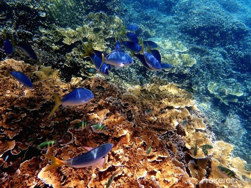 The Great Barrier Reef. (IANS Photo)