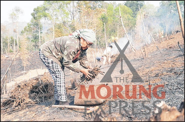 A woman clears debris and works at her new jhum field days after the field was burnt at Mokokchung village. (Morung Photo)
