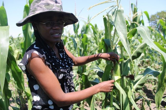 Young farmers who have land are failing to access bank loans despite the Zimbabwean government touting farming as the final frontier that will guarantee the country's food security needs. (Busani Bafana/IPS Photo)