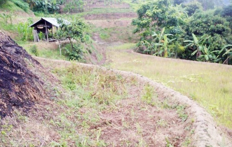 Paddy fields in Phek village lie unattended as agricultural activities across various parts of Nagaland have been affected due to scanty rainfall.
