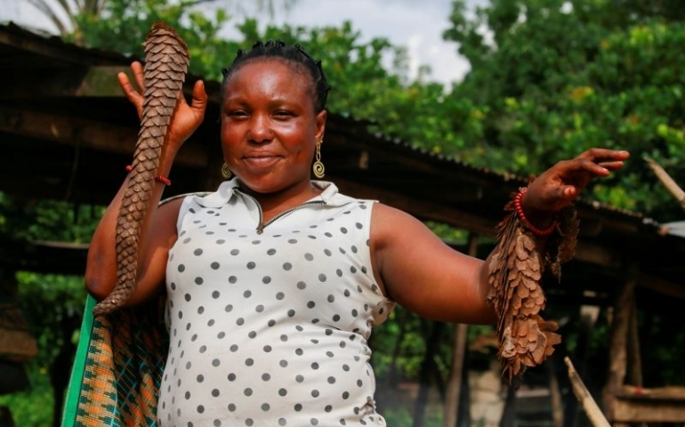 Nigeria becomes Africa's staging ground for the illegal pangolin trade with Asia